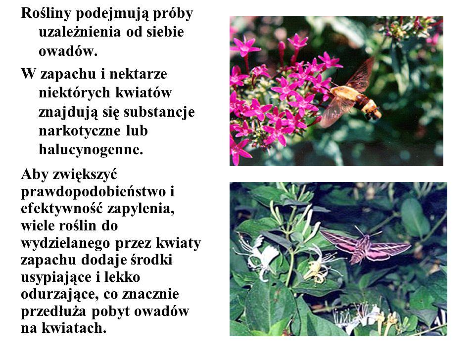 Rośliny podejmują próby uzależnienia od siebie owadów. W zapachu i nektarze niektórych kwiatów znajdują się substancje narkotyczne lub halucynogenne.