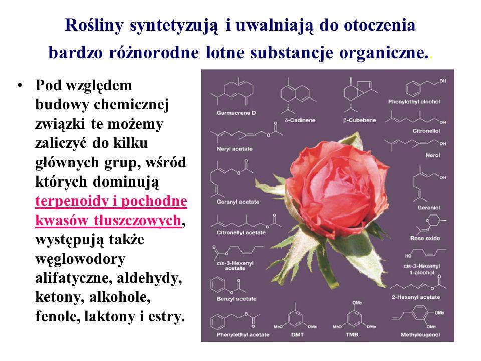 Rośliny syntetyzują i uwalniają do otoczenia bardzo różnorodne lotne substancje organiczne.. Pod względem budowy chemicznej związki te możemy zaliczyć
