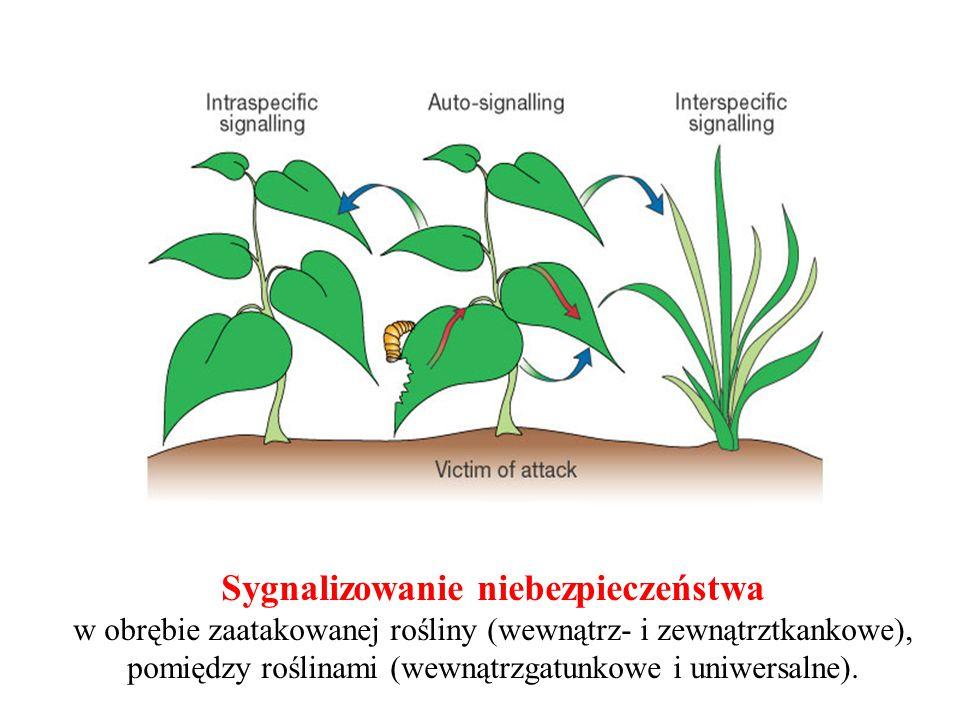 Sygnalizowanie niebezpieczeństwa w obrębie zaatakowanej rośliny (wewnątrz- i zewnątrztkankowe), pomiędzy roślinami (wewnątrzgatunkowe i uniwersalne).
