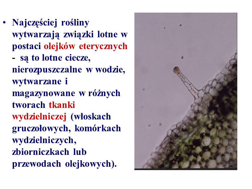 Najczęściej rośliny wytwarzają związki lotne w postaci olejków eterycznych - są to lotne ciecze, nierozpuszczalne w wodzie, wytwarzane i magazynowane