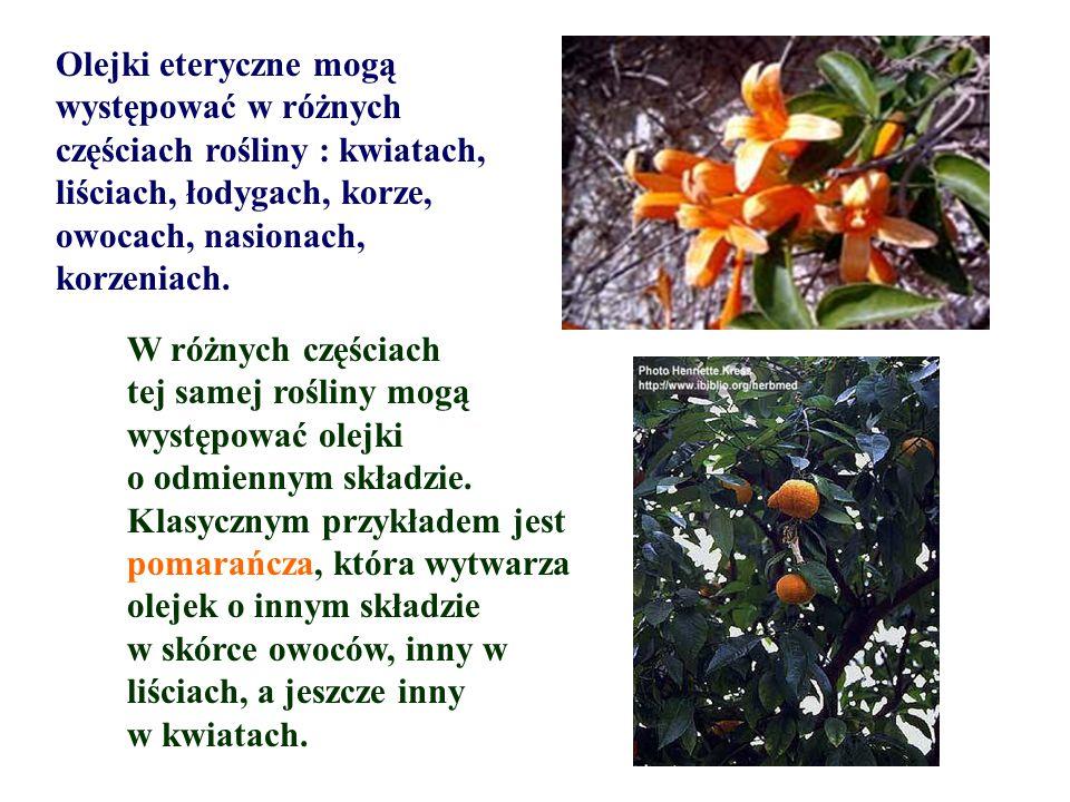 Olejki eteryczne mogą występować w różnych częściach rośliny : kwiatach, liściach, łodygach, korze, owocach, nasionach, korzeniach. W różnych częściac