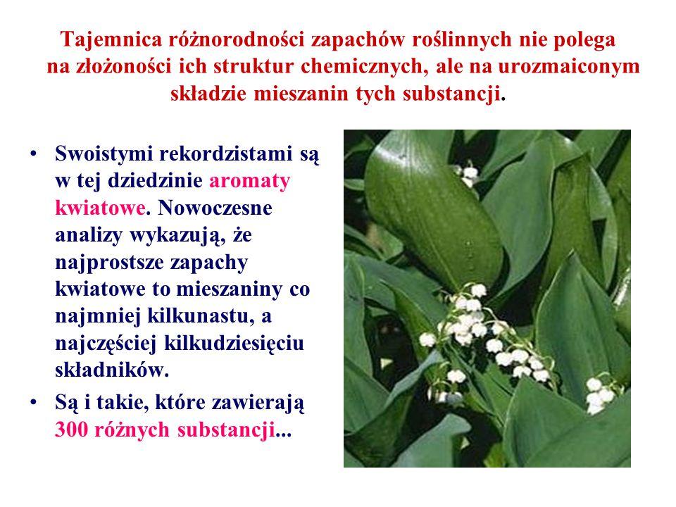 Tajemnica różnorodności zapachów roślinnych nie polega na złożoności ich struktur chemicznych, ale na urozmaiconym składzie mieszanin tych substancji.