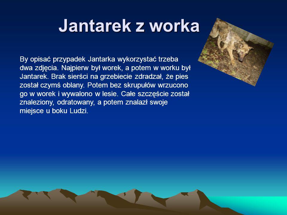 Jantarek z worka By opisać przypadek Jantarka wykorzystać trzeba dwa zdjęcia. Najpierw był worek, a potem w worku był Jantarek. Brak sierści na grzebi