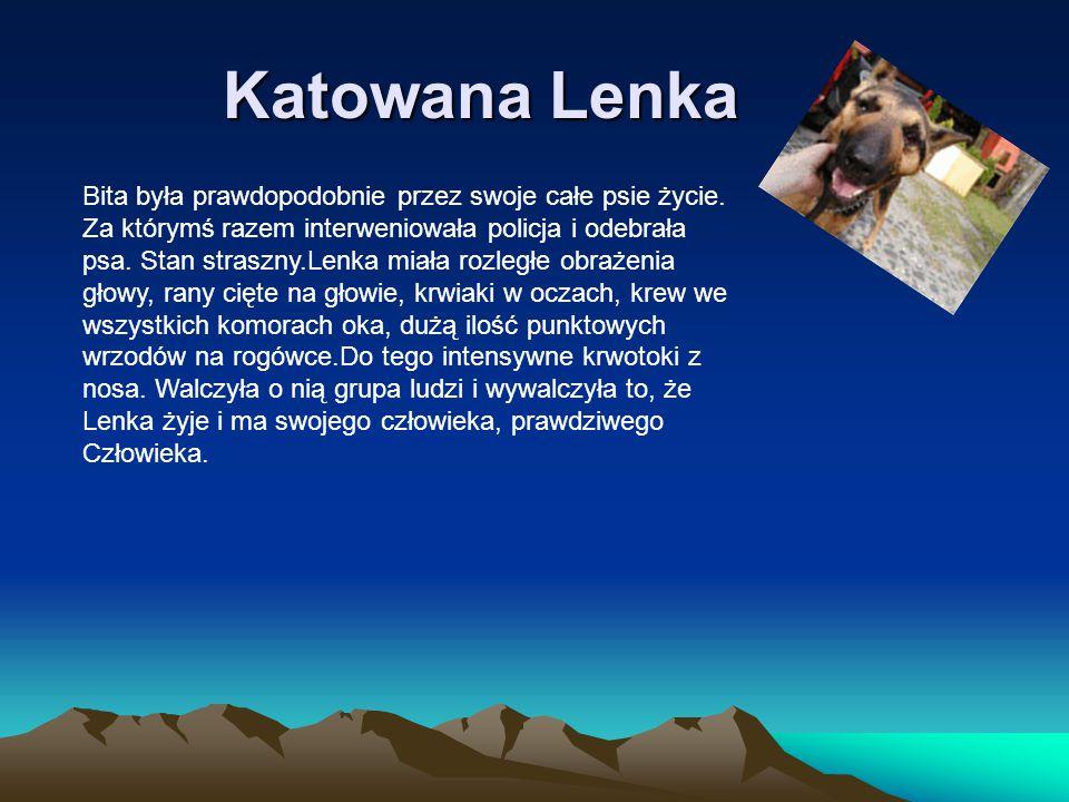 Katowana Lenka Bita była prawdopodobnie przez swoje całe psie życie. Za którymś razem interweniowała policja i odebrała psa. Stan straszny.Lenka miała