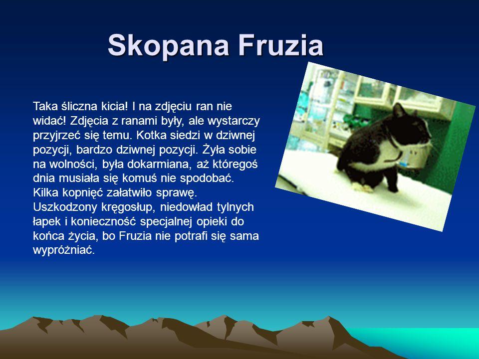Skopana Fruzia Taka śliczna kicia! I na zdjęciu ran nie widać! Zdjęcia z ranami były, ale wystarczy przyjrzeć się temu. Kotka siedzi w dziwnej pozycji