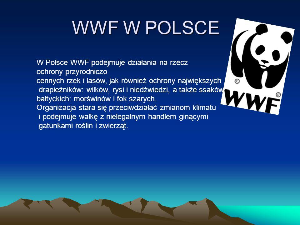 WWF W POLSCE W Polsce WWF podejmuje działania na rzecz ochrony przyrodniczo cennych rzek i lasów, jak również ochrony największych drapieżników: wilkó