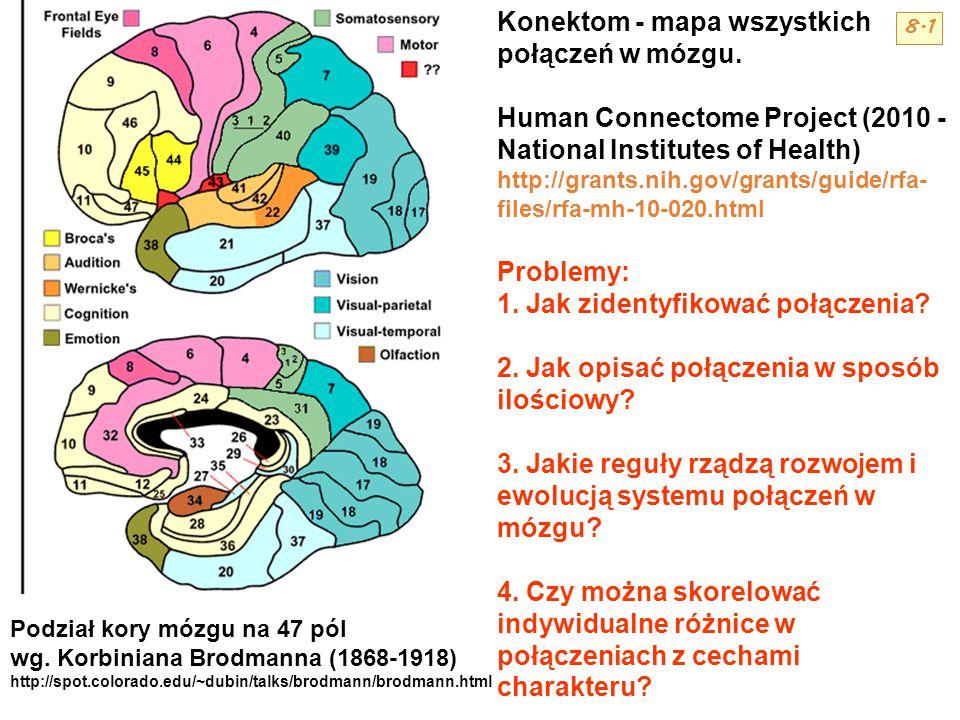 Konektom - mapa wszystkich połączeń w mózgu. Human Connectome Project (2010 - National Institutes of Health) http://grants.nih.gov/grants/guide/rfa- f