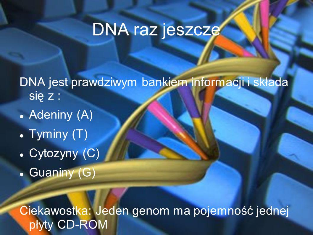 DNA raz jeszcze DNA jest prawdziwym bankiem informacji i składa się z : Adeniny (A) Tyminy (T) Cytozyny (C) Guaniny (G) Ciekawostka: Jeden genom ma po