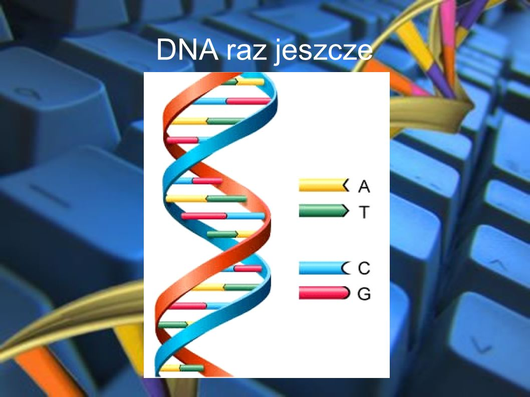 Podstawy Działania W komputerze DNA informacja jest zakodowana w postaci łańcuchów DNA.