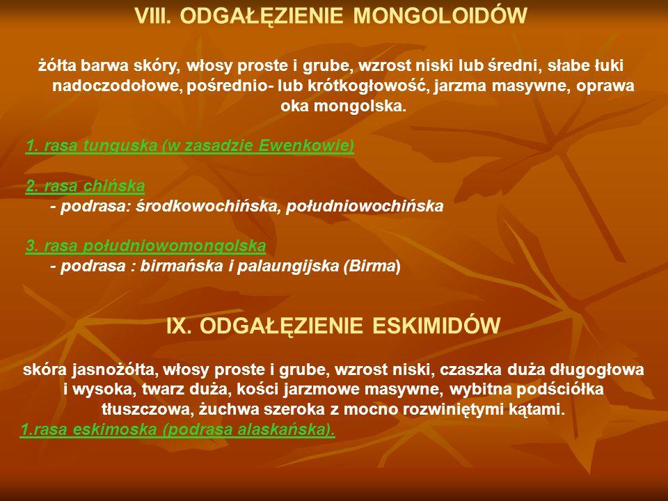 D.Pień rasowy Europoidów.