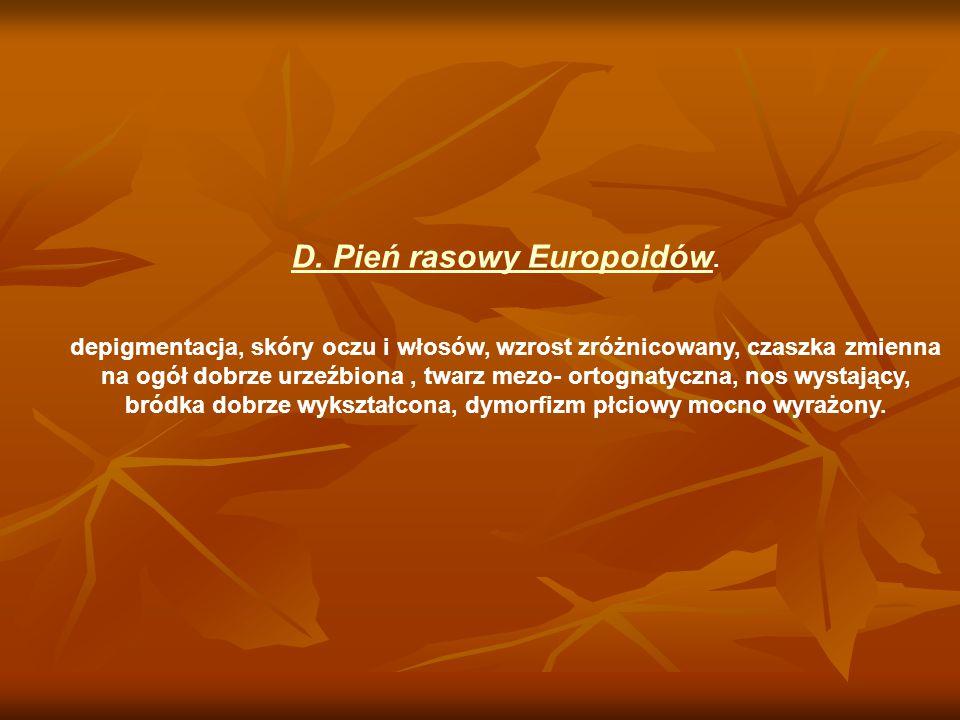 D. Pień rasowy Europoidów. depigmentacja, skóry oczu i włosów, wzrost zróżnicowany, czaszka zmienna na ogół dobrze urzeźbiona, twarz mezo- ortognatycz