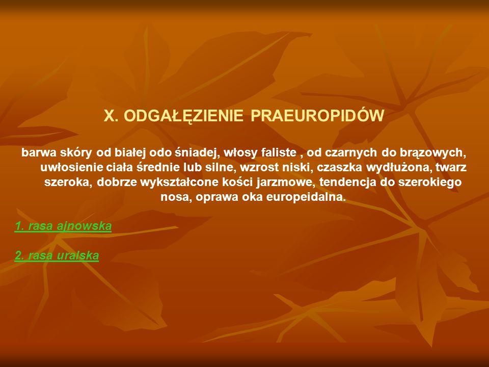 X. ODGAŁĘZIENIE PRAEUROPIDÓW barwa skóry od białej odo śniadej, włosy faliste, od czarnych do brązowych, uwłosienie ciała średnie lub silne, wzrost ni