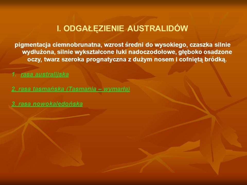 I. ODGAŁĘZIENIE AUSTRALIDÓW pigmentacja ciemnobrunatna, wzrost średni do wysokiego, czaszka silnie wydłużona, silnie wykształcone łuki nadoczodołowe,