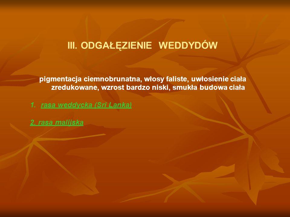 B.Pień rasowy Negroidów.