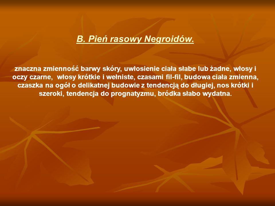 B. Pień rasowy Negroidów. znaczna zmienność barwy skóry, uwłosienie ciała słabe lub żadne, włosy i oczy czarne, włosy krótkie i wełniste, czasami fil-
