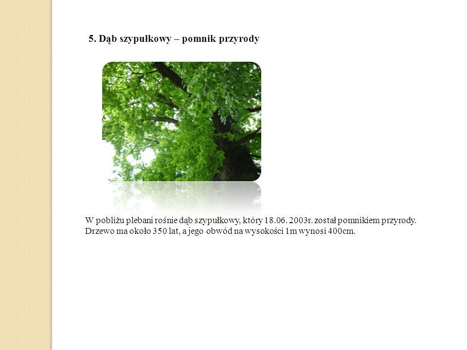 5.Dąb szypułkowy – pomnik przyrody W pobliżu plebani rośnie dąb szypułkowy, który 18.06.