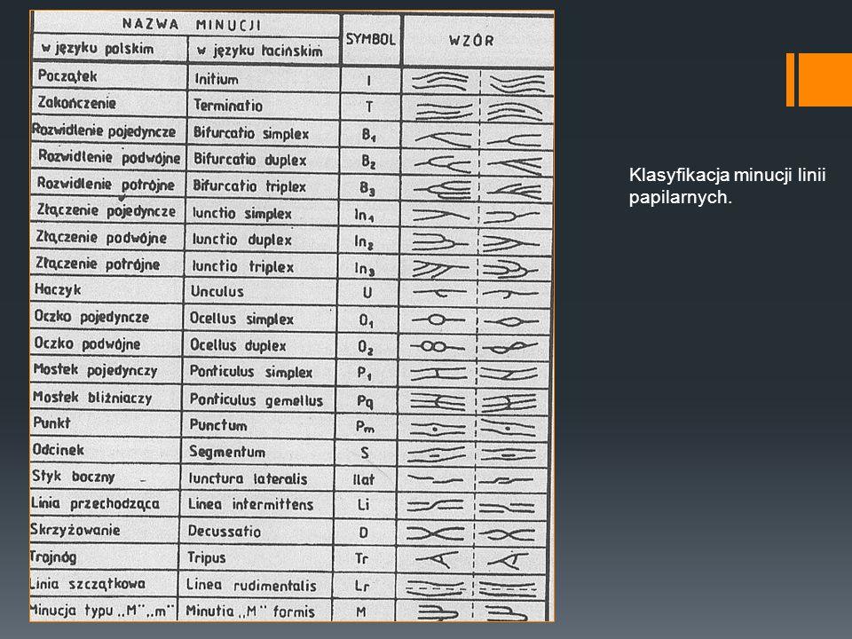 Klasyfikacja minucji linii papilarnych.