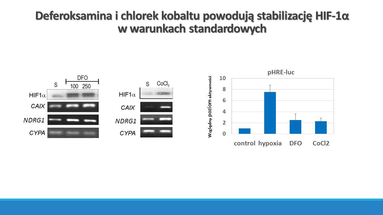 Deferoksamina i chlorek kobaltu powodują stabilizację HIF-1α w warunkach standardowych Względny poziom aktywności NDRG1