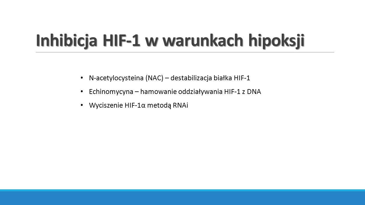 Inhibicja HIF-1 w warunkach hipoksji N-acetylocysteina (NAC) – destabilizacja białka HIF-1 Echinomycyna – hamowanie oddziaływania HIF-1 z DNA Wyciszen