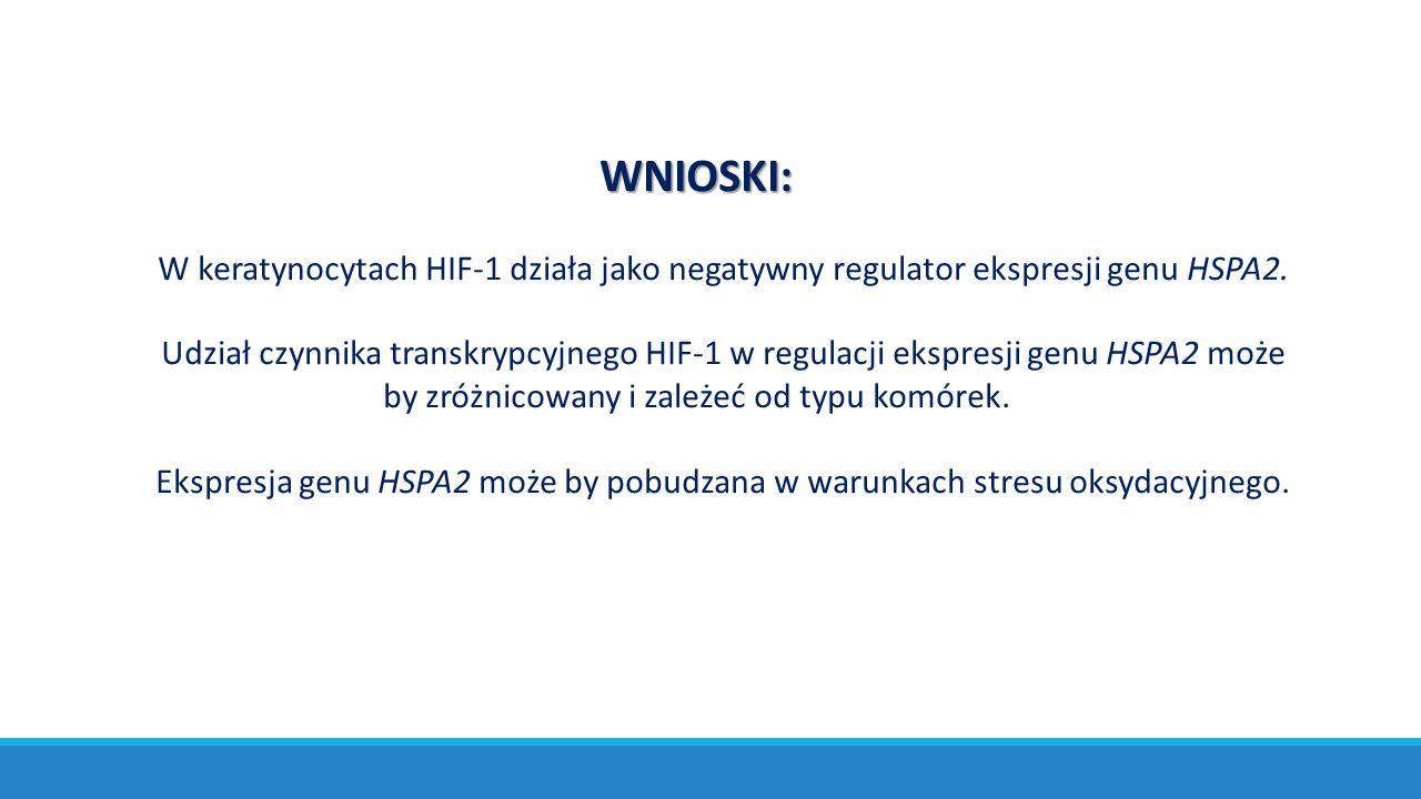 WNIOSKI: W keratynocytach HIF-1 działa jako negatywny regulator ekspresji genu HSPA2. Udział czynnika transkrypcyjnego HIF-1 w regulacji ekspresji gen