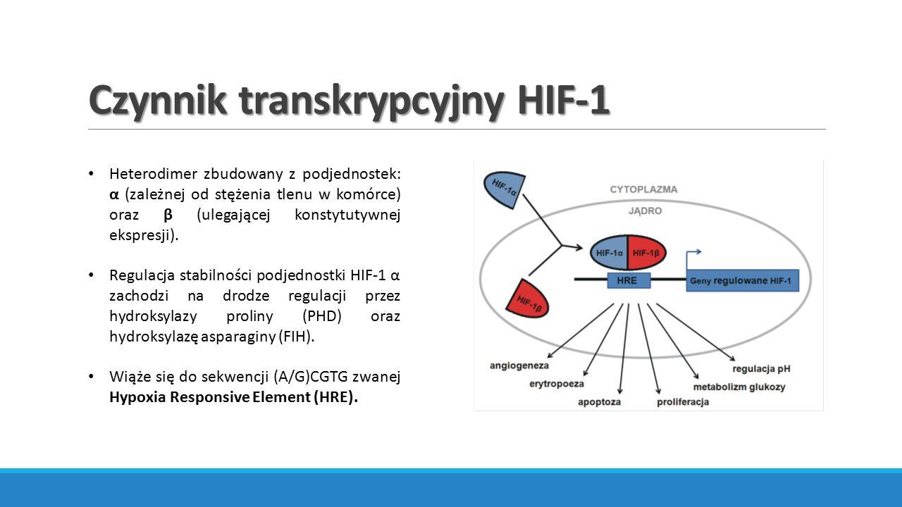 Czynnik transkrypcyjny HIF-1 Heterodimer zbudowany z podjednostek: α (zależnej od stężenia tlenu w komórce) oraz β (ulegającej konstytutywnej ekspresj
