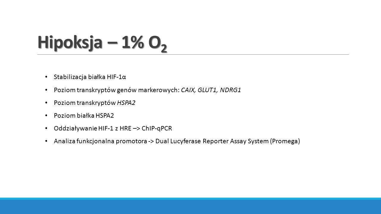 Hipoksja – 1% O 2 Stabilizacja białka HIF-1α Poziom transkryptów genów markerowych: CAIX, GLUT1, NDRG1 Poziom transkryptów HSPA2 Poziom białka HSPA2 O