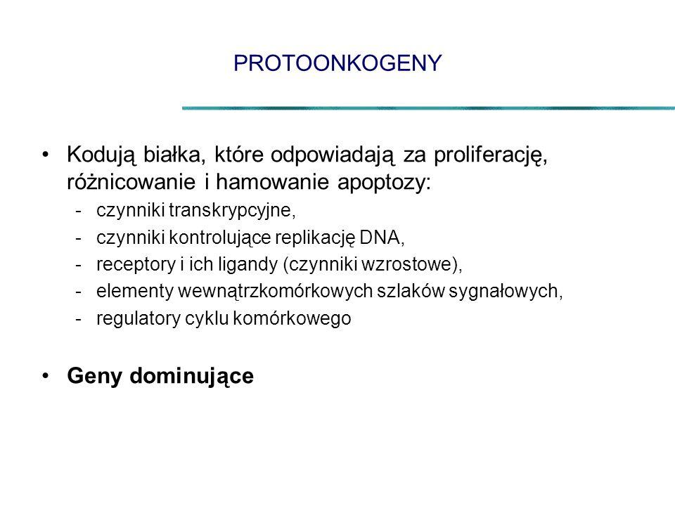 PROTOONKOGENY Kodują białka, które odpowiadają za proliferację, różnicowanie i hamowanie apoptozy: -czynniki transkrypcyjne, -czynniki kontrolujące re