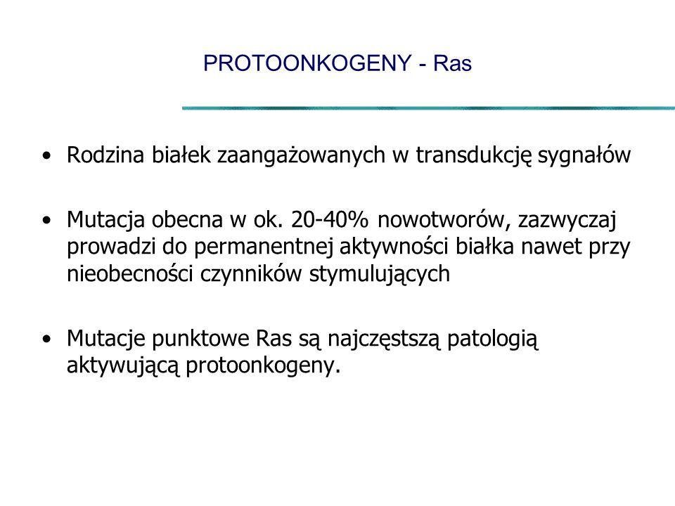 PROTOONKOGENY - Ras Rodzina białek zaangażowanych w transdukcję sygnałów Mutacja obecna w ok. 20-40% nowotworów, zazwyczaj prowadzi do permanentnej ak