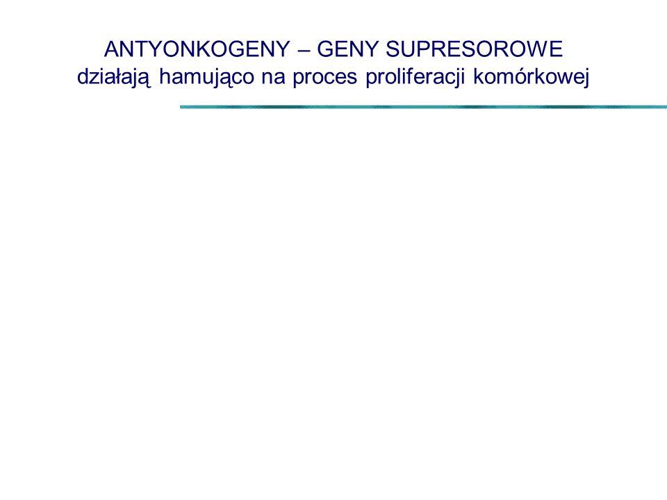 ANTYONKOGENY – GENY SUPRESOROWE działają hamująco na proces proliferacji komórkowej