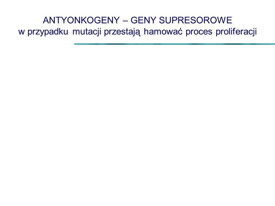 ANTYONKOGENY – GENY SUPRESOROWE w przypadku mutacji przestają hamować proces proliferacji