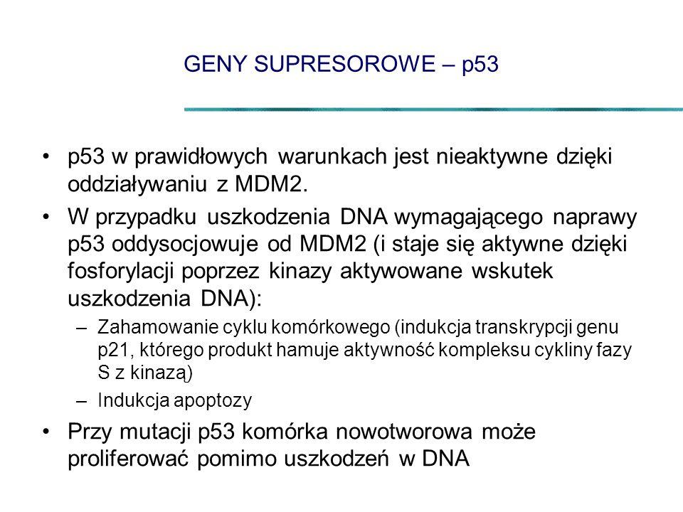 GENY SUPRESOROWE – p53 p53 w prawidłowych warunkach jest nieaktywne dzięki oddziaływaniu z MDM2. W przypadku uszkodzenia DNA wymagającego naprawy p53