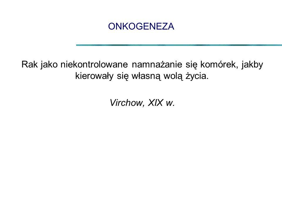 ONKOGENEZA Rak jako niekontrolowane namnażanie się komórek, jakby kierowały się własną wolą życia. Virchow, XIX w.