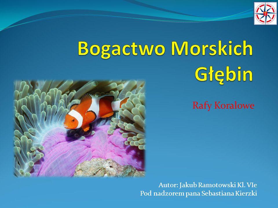 Rafy Koralowe Autor: Jakub Ramotowski Kl. VIe Pod nadzorem pana Sebastiana Kierzki