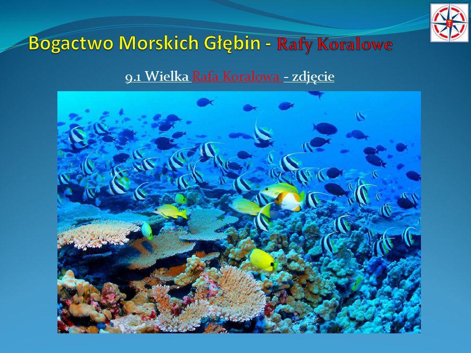 10.Rafa Koralowa w Egipcie Złota Zatoka Riwiery Morza Czerwonego - Sharm el Sheikh – popularne miejsce wypoczynku Europejczyków.