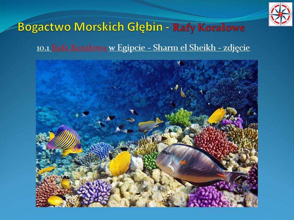 11.Rafy Koralowe w Egipcie – Hurghada.