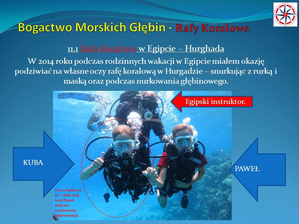 12.Rafa Koralowa – ryby i organizmy żywe.