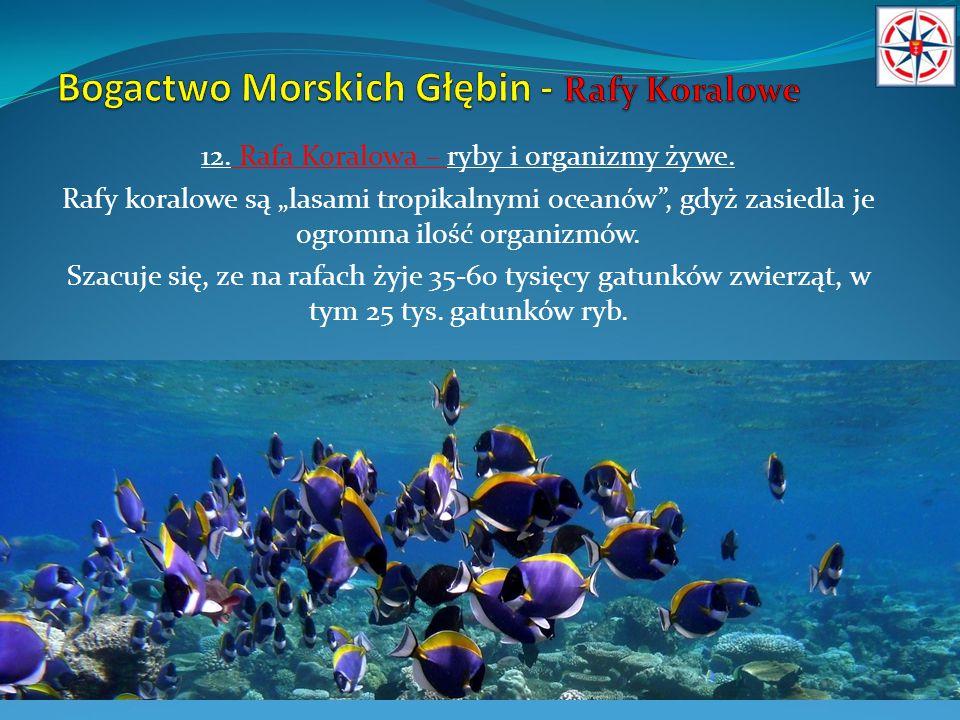 """12. Rafa Koralowa – ryby i organizmy żywe. Rafy koralowe są """"lasami tropikalnymi oceanów"""", gdyż zasiedla je ogromna ilość organizmów. Szacuje się, ze"""