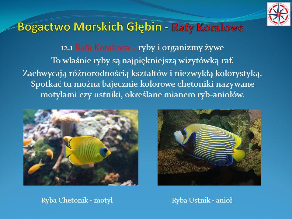 12.1 Rafa Koralowa – ryby i organizmy żywe To właśnie ryby są najpiękniejszą wizytówką raf. Zachwycają różnorodnością kształtów i niezwykłą kolorystyk