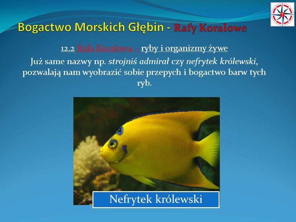 12.2 Rafa Koralowa – ryby i organizmy żywe Już same nazwy np. strojniś admirał czy nefrytek królewski, pozwalają nam wyobrazić sobie przepych i bogact