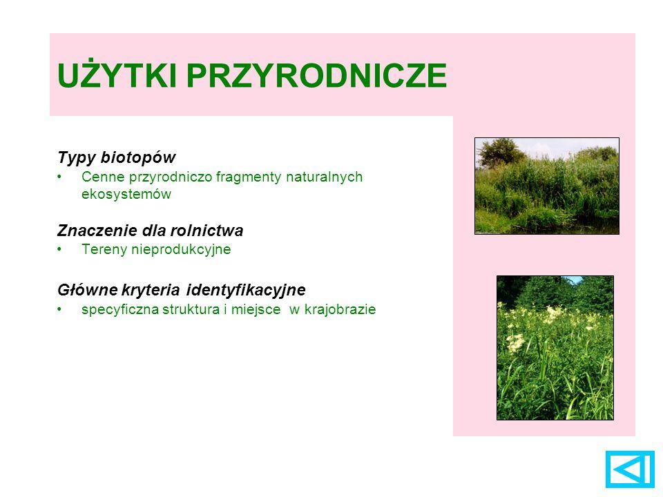 GRUNTY ORNE – rośliny towarzyszące uprawom przewiercień okrągłolistny