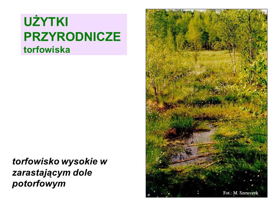 UŻYTKI PRZYRODNICZE torfowiska torfowisko wysokie w zarastającym dole potorfowym Fot.: M. Szewczyk