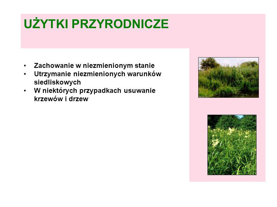 typowe miejsce występowania szuwarów i wilgotnych ziołorośli to brzegi cieków, starorzeczy i oczek wodnych Fot.: W.