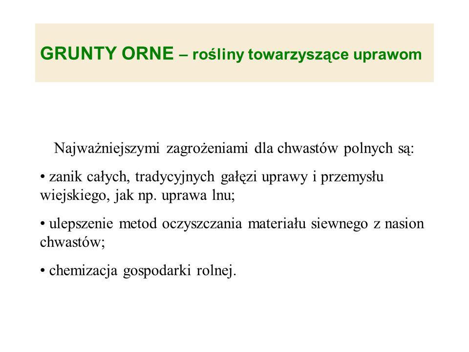 GRUNTY ORNE – rośliny towarzyszące uprawom Najważniejszymi zagrożeniami dla chwastów polnych są: zanik całych, tradycyjnych gałęzi uprawy i przemysłu wiejskiego, jak np.
