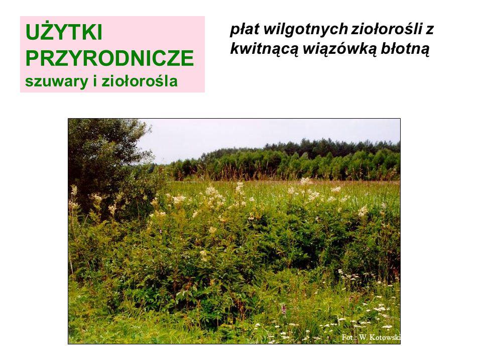 wiązówka błotna (wilgotne ziołorośla) Fot.: W. Kotowski UŻYTKI PRZYRODNICZE szuwary i ziołorośla