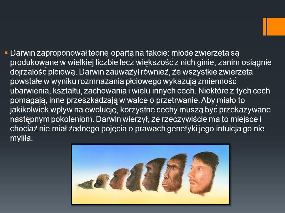  Darwin zaproponował teorie ̨ oparta ̨ na fakcie: młode zwierze ̨ ta sa ̨ produkowane w wielkiej liczbie lecz wie ̨ kszość z nich ginie, zanim osia
