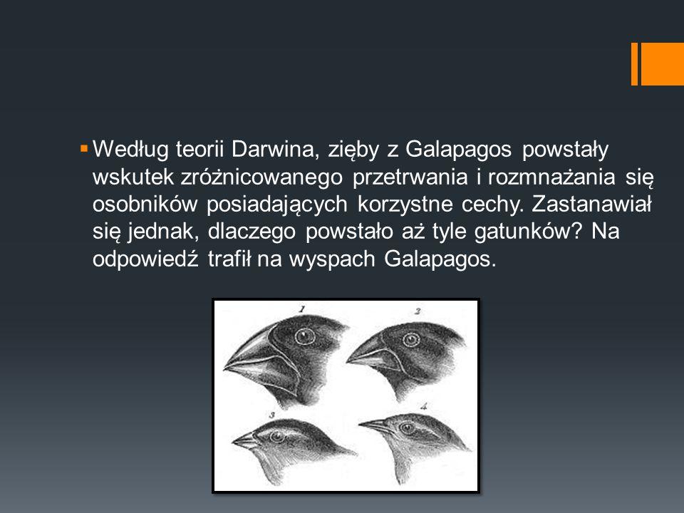  Według teorii Darwina, zie ̨ by z Galapagos powstały wskutek zróz ̇ nicowanego przetrwania i rozmnaz ̇ ania sie ̨ osobników posiadaja ̨ cych korzy