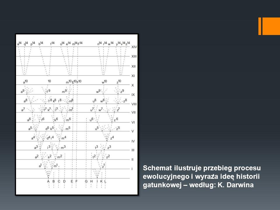 Schemat ilustruje przebieg procesu ewolucyjnego i wyraz ̇ a idee ̨ historii gatunkowej – według: K. Darwina