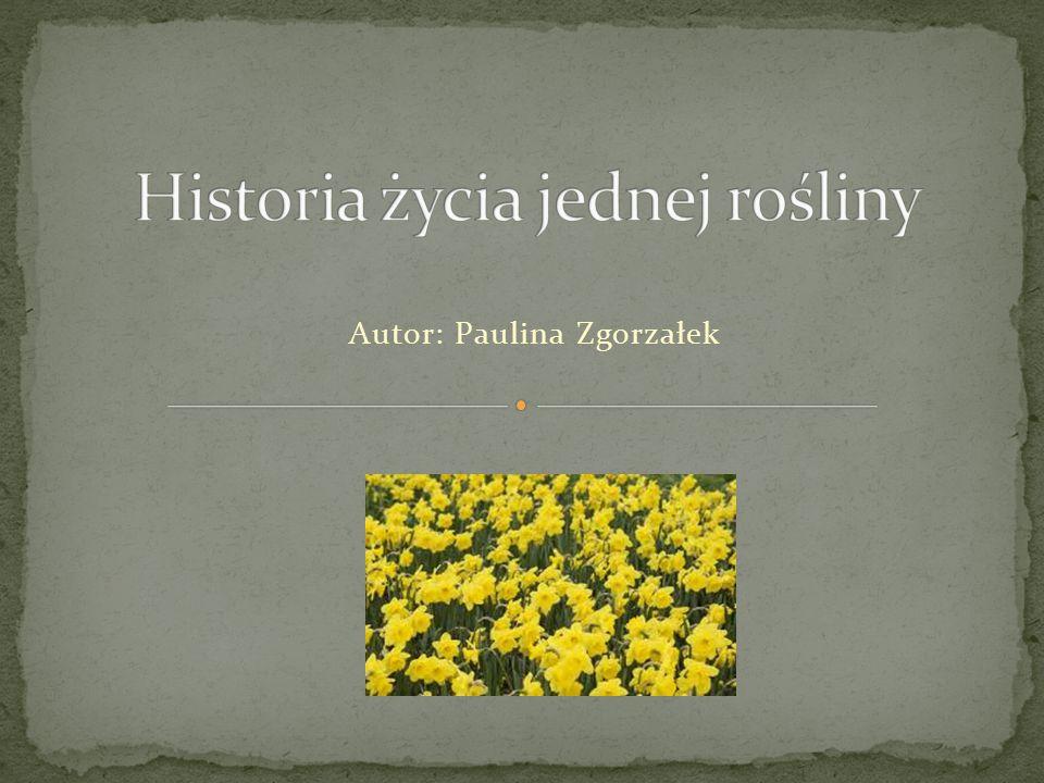 Autor: Paulina Zgorzałek