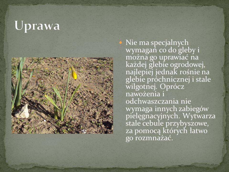 Nie ma specjalnych wymagań co do gleby i można go uprawiać na każdej glebie ogrodowej, najlepiej jednak rośnie na glebie próchnicznej i stale wilgotne
