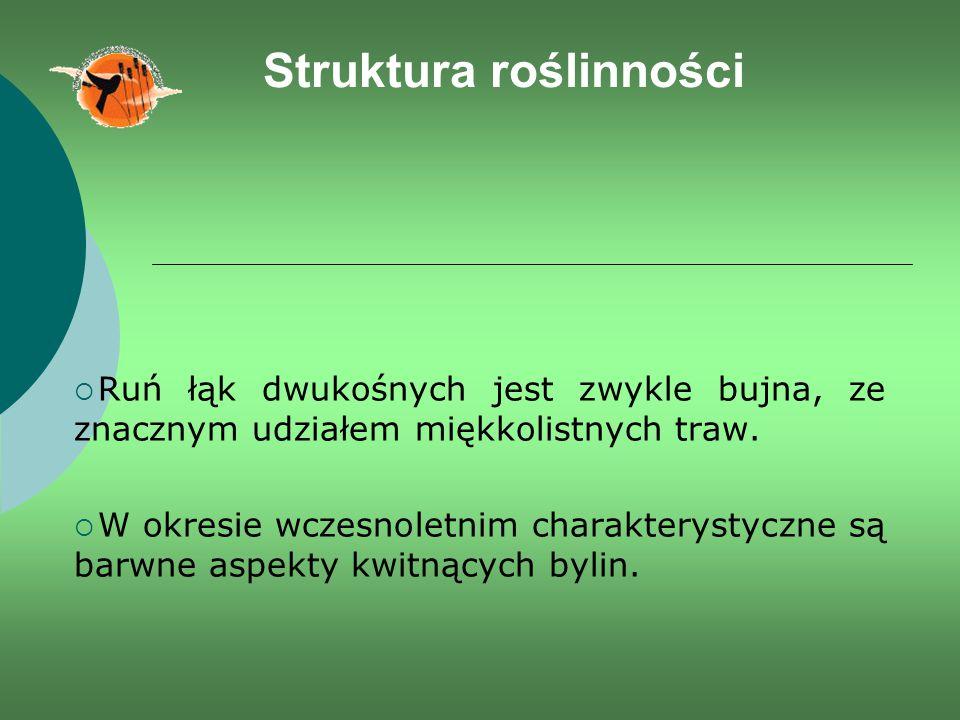 Struktura roślinności  Ruń łąk dwukośnych jest zwykle bujna, ze znacznym udziałem miękkolistnych traw.  W okresie wczesnoletnim charakterystyczne są